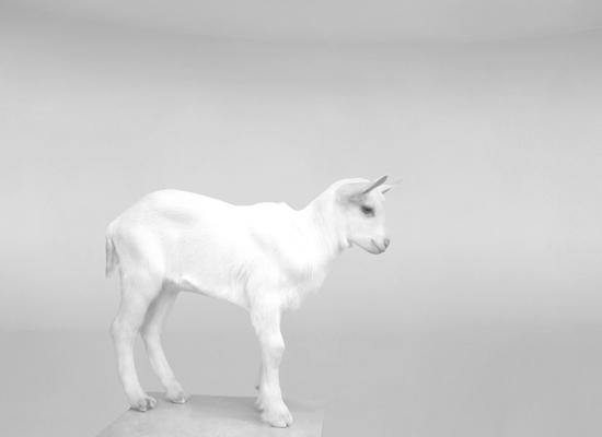 veasey_bev_goat
