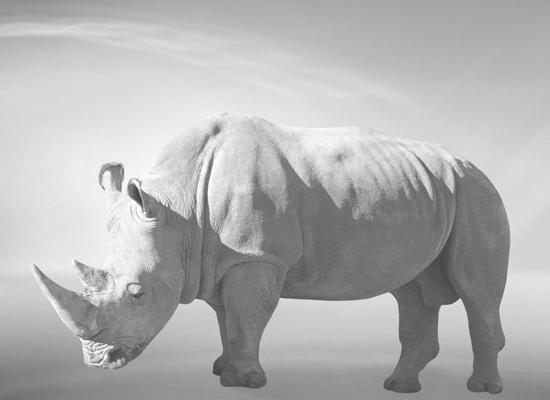 veasey_bev_rhino