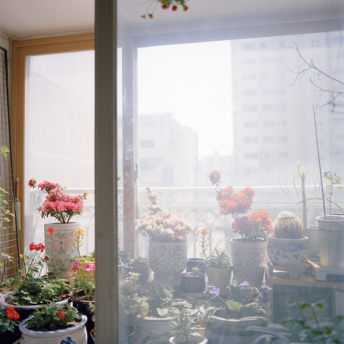 Halmoni's Balcony Garden