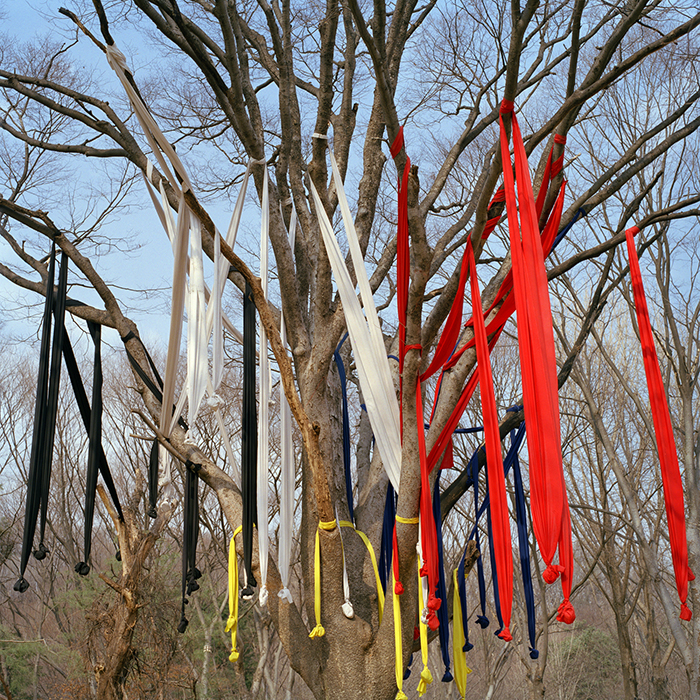 Shaman ribbons guard the village entrance, Suwon